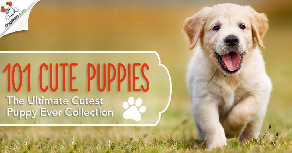 101 Cute Puppies
