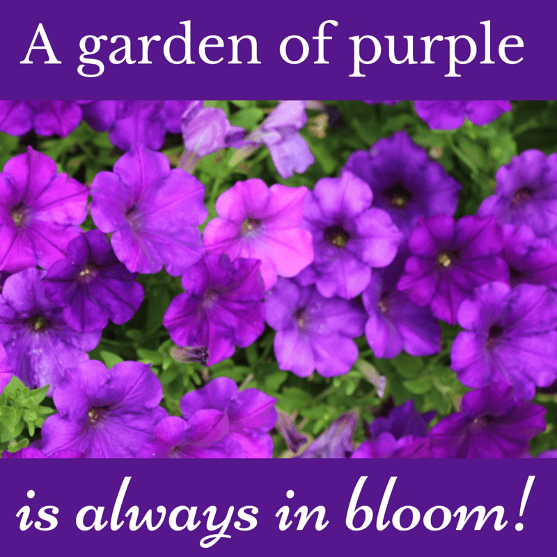 A Garden Of Purple