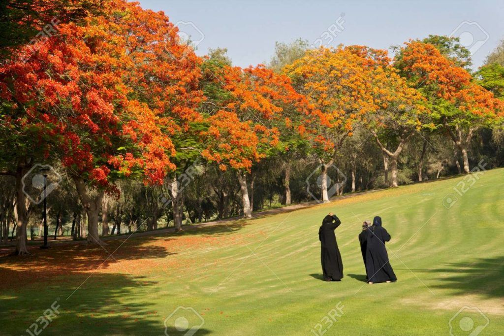 Arab Women Relaxing Among Trees