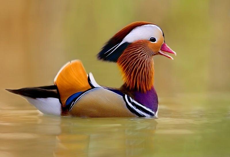 Beautiful Bird In Lake Desktop Wallpaper