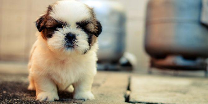 Best Places For Cute Puppies