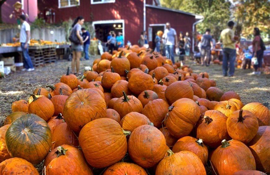 Best Pumpkin Patches In America