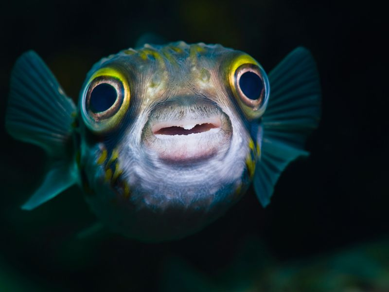 Big Eyes Fish