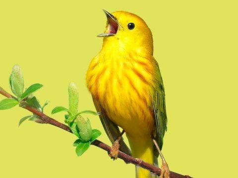 Bird Academy