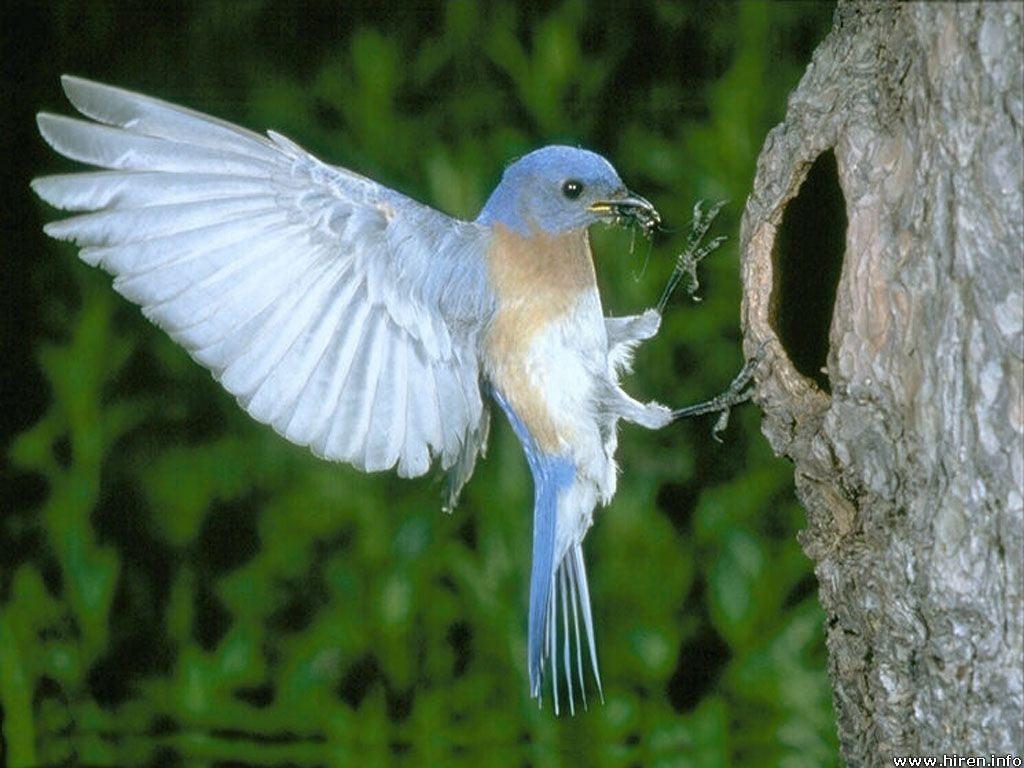 Bird Seeing Nest