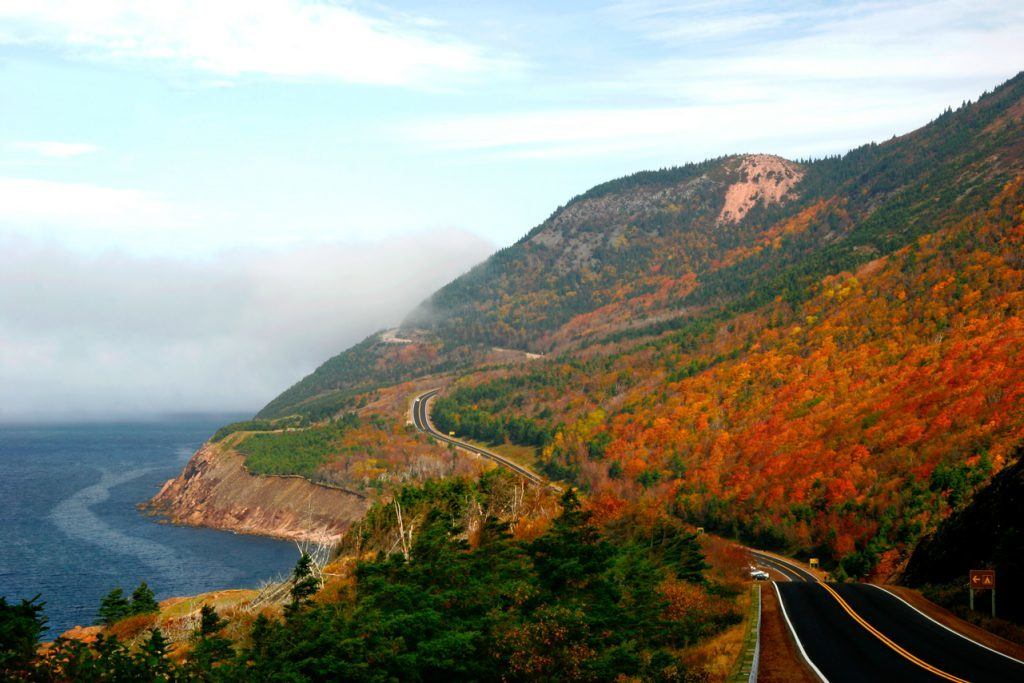 Cabot Trail Autumn Leaves