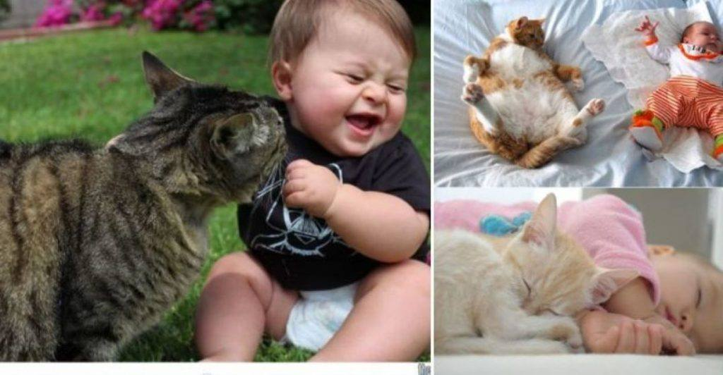 Cats And Babies To Melt Your Heart