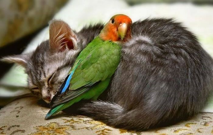 Cats And Parrots As Friends