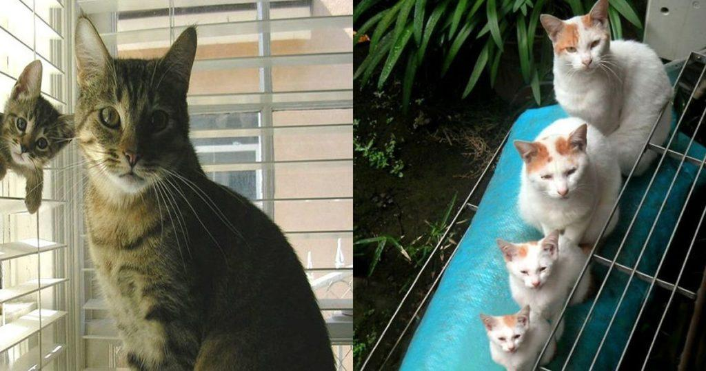 Cats And Their Matching Kittens
