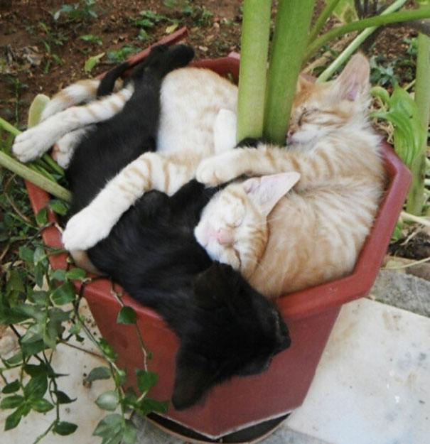 Cats In A Pot