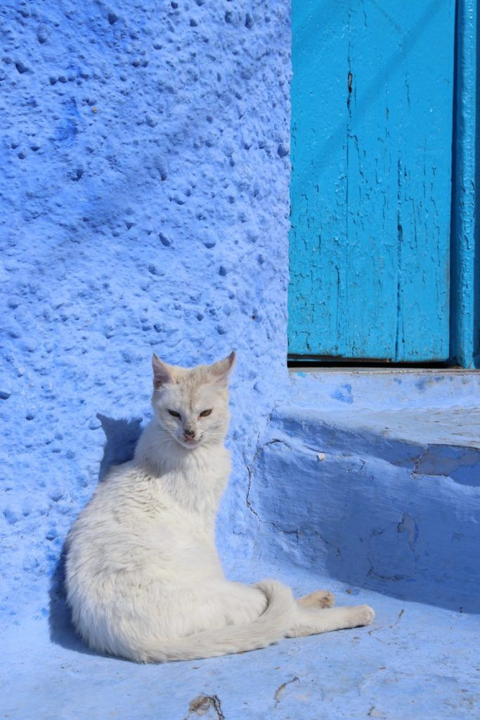 Cats In Chefchaouen