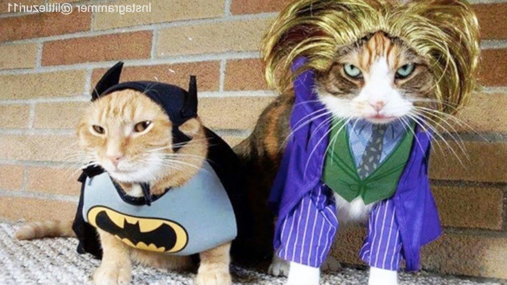 Cats In Ridiculously Adorable Costumes