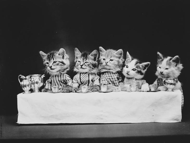 Cats Playing Dress Up