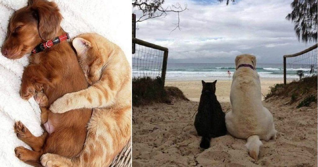 Cats Who Fell In Love With Dogs