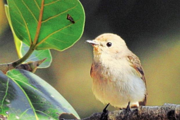 Colananda Bird