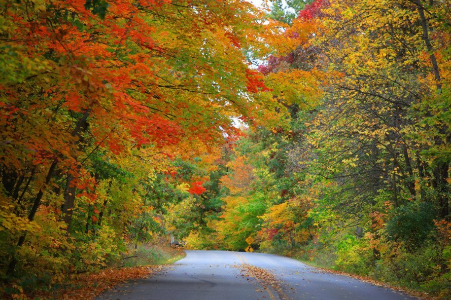 Colorful Autumn Leaves Along Road