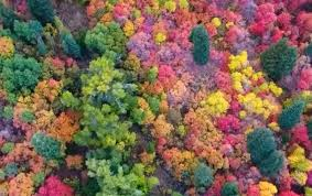 Colorful Fall Image