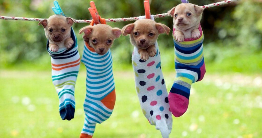 Cute Puppies Images Just Hanging Around