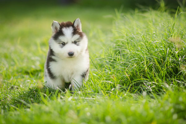 Cute Puppies You'll Have To See