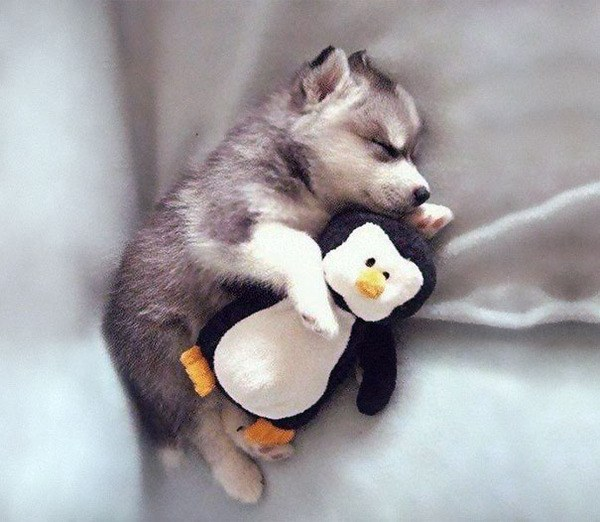 Cute Puppy With Toy