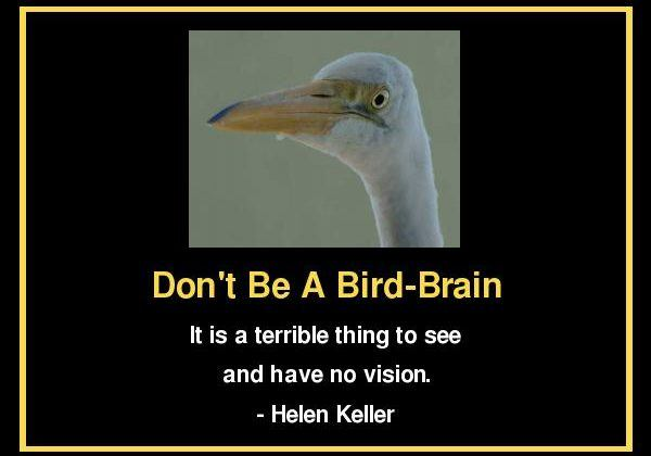 Don't Be A Bird