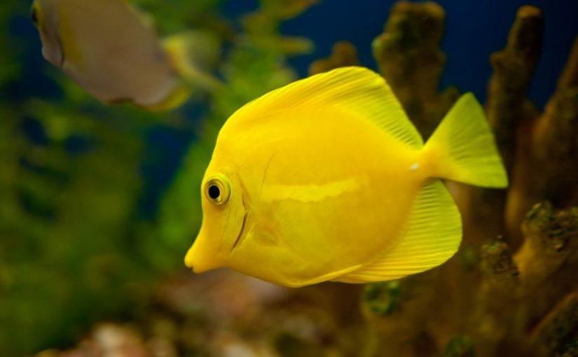 Dream Interpretation Fish