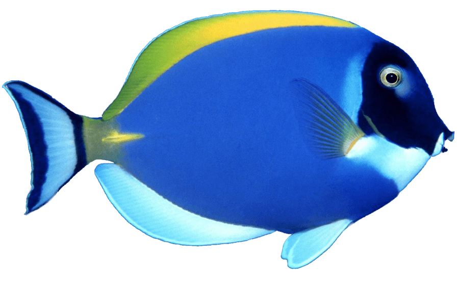 Fish In Blue
