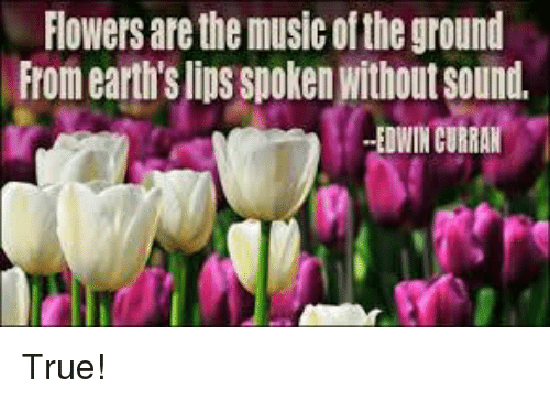 Flowers Are The Music