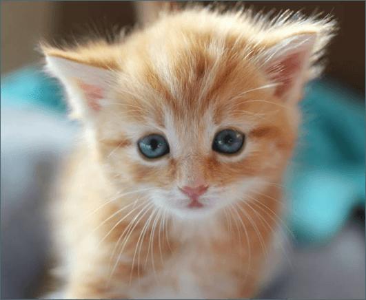 Fostering Kitten