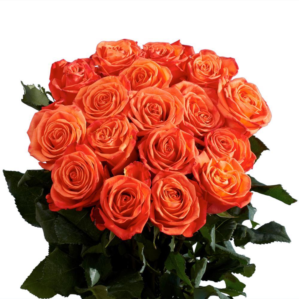 Global Fresh Orange Roses
