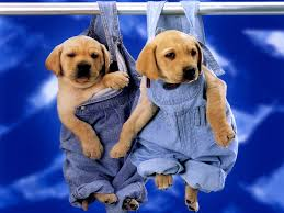 Hanging Puppies