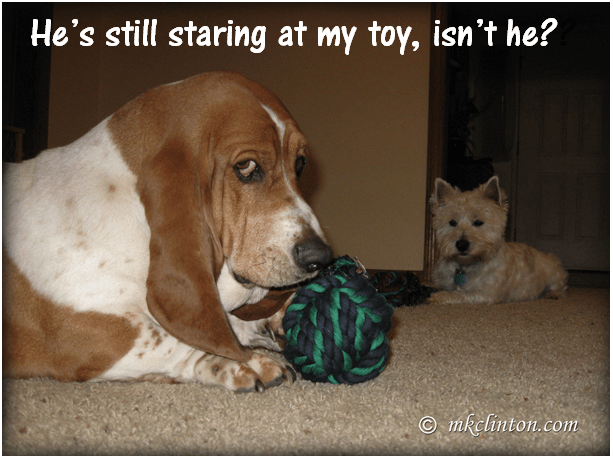 He's Still Staring At My Toy