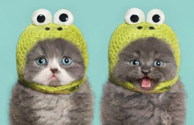 Hilariously Adorable Cats
