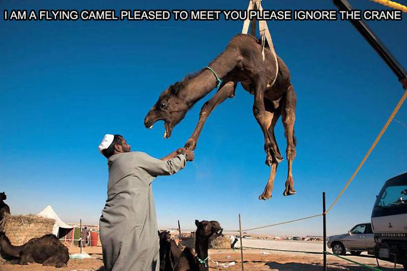 I Am Flying Camel