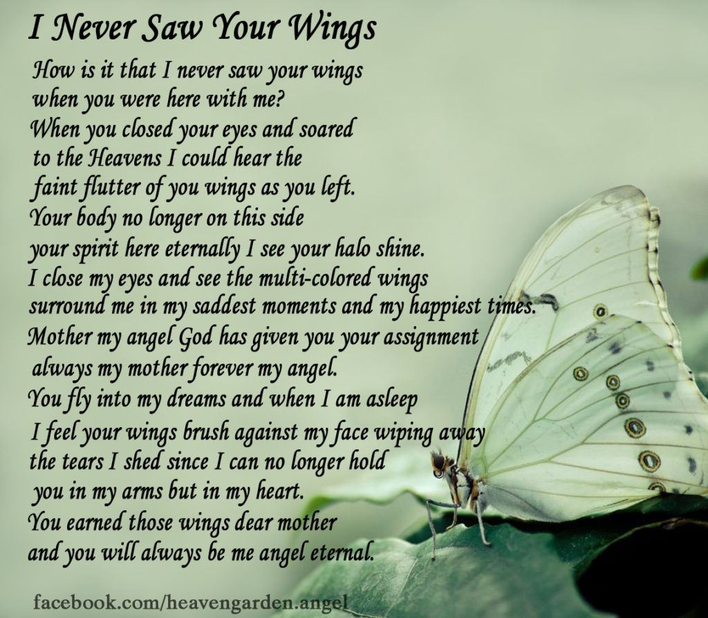 I Never Saw Your Wings