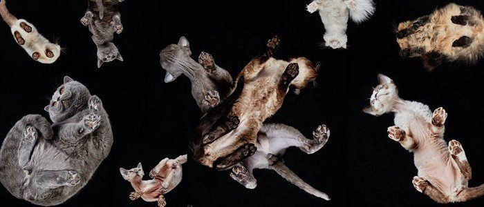 Images Of Cats Shot From Underneath