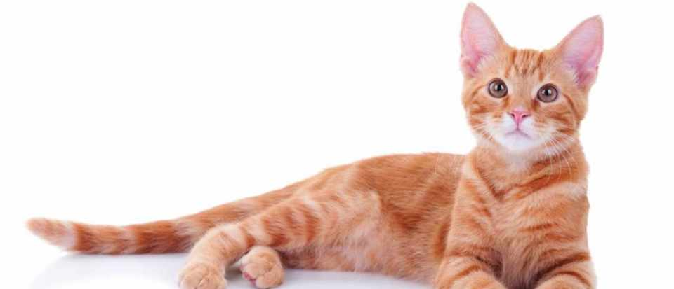 Is It True That Most Ginger Cats Are Male