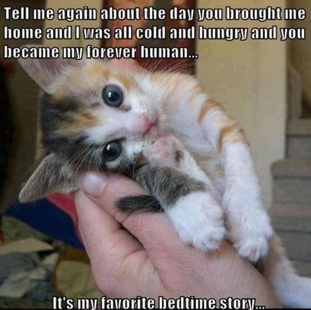 It's My Favorite Bedtime Story