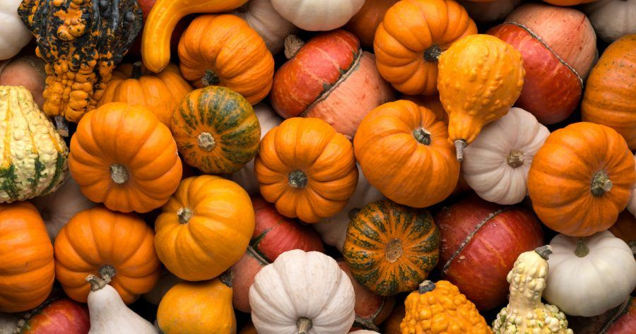 Kinds Of Pumpkin