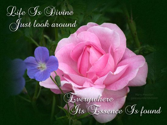 Life Is Divine