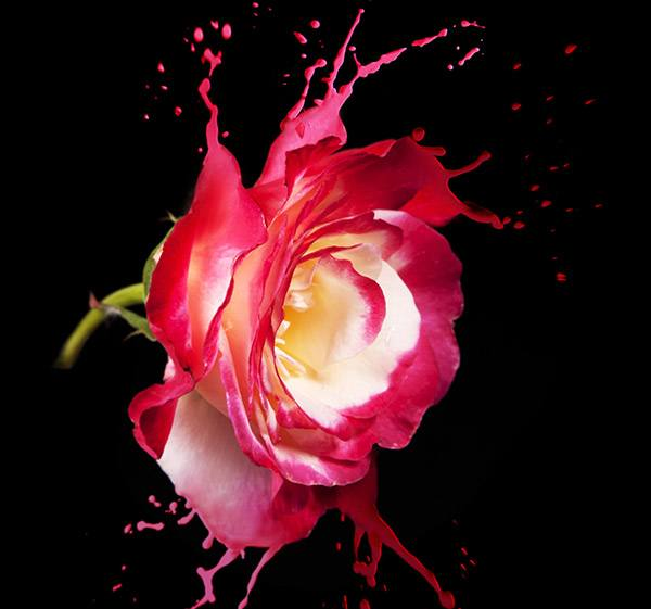 Meaning Of Rose