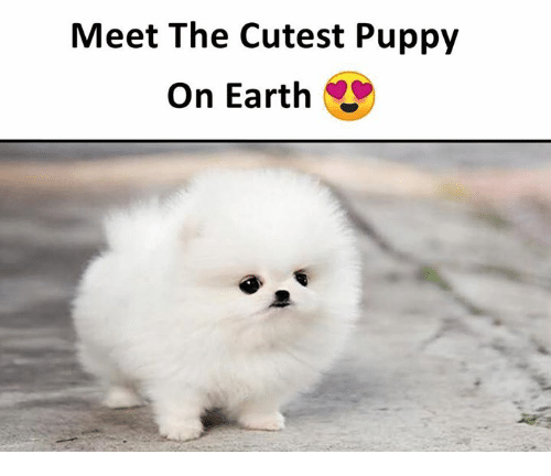 Meet The Cutest Puppy On Earth