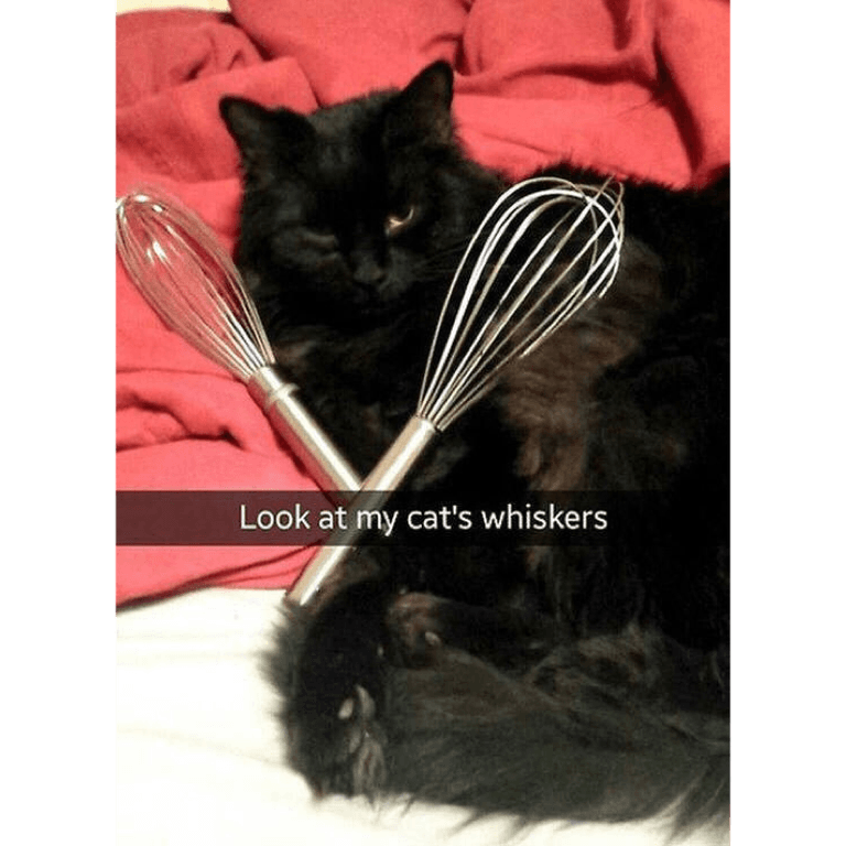 My cat's whiskers