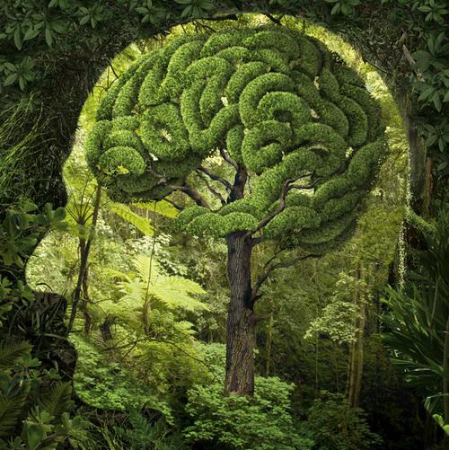 Nature Brain