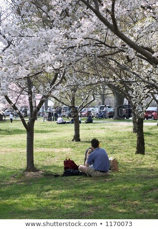 People Relaxing Under Blossom Trees