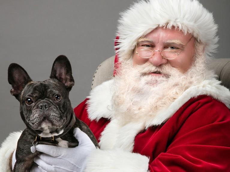 Pet Nights With Santa