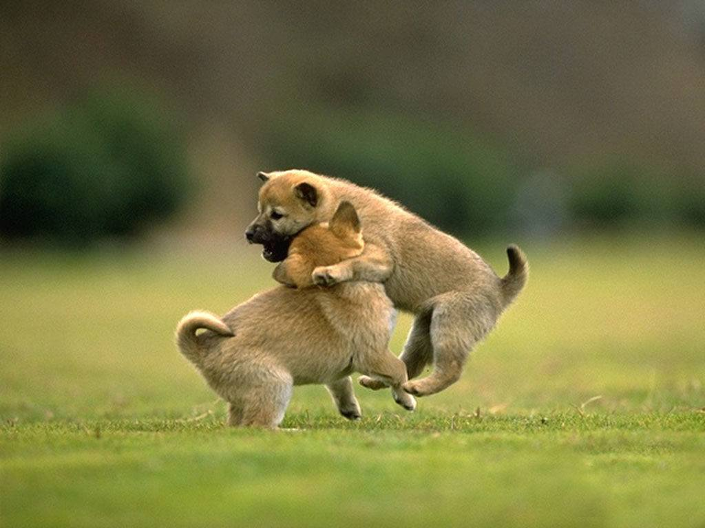 Playing Friendship