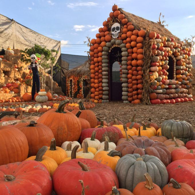 Pumpkin House Village