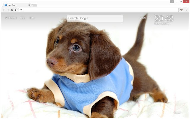 Puppy With Shirt