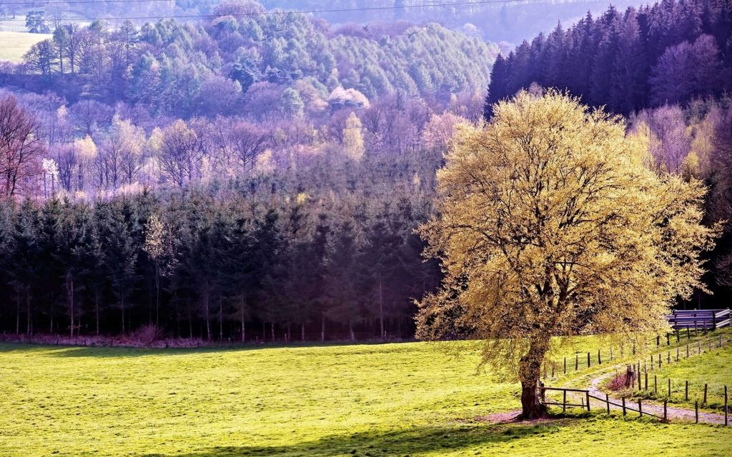 Relaxing Trees Meadow